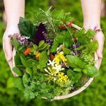 Herbで日々の生活に癒しを