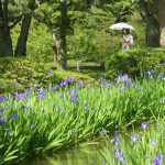 沖縄、浅草と並んで、東村山が英語圏で紹介されています!